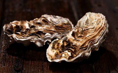 Austern: harte Schale, einmaliger Kern
